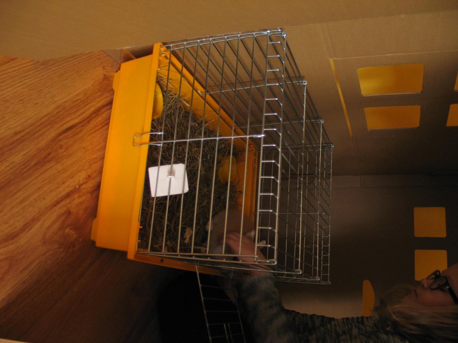 domek królika